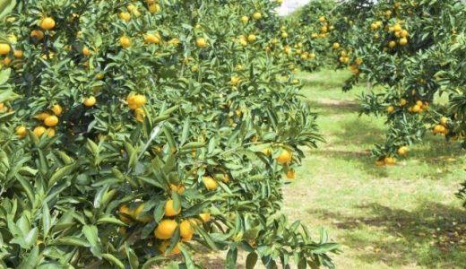 みかん収穫量 都道府県別ランキング
