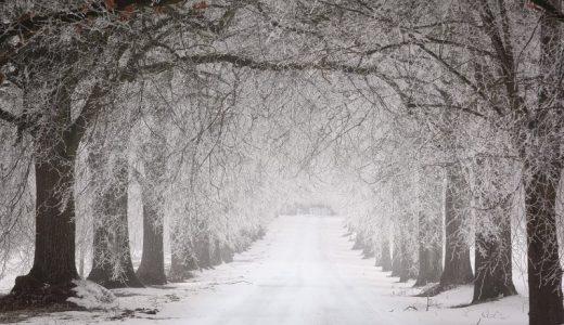 名古屋も強い風と大雪で雪化粧 1月24日分の写真と記録